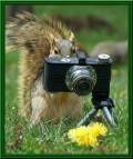 Animale - Poza la minut
