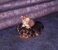 Animale - Pisica mai tare decat cainele