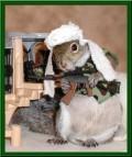 Animale - Iepurasul terorist
