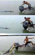 Animale - Speriat de crocodil