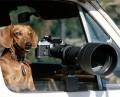 Animale - Cainele fotograf