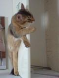 Animale - De-a v-ati ascunselea cu pisi