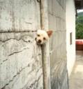 Animale - Prins in perete