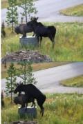 Animale - Dragostea este mare