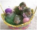 Paste - Cosulet cu oua
