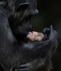 Animale - Mama si puiul ei