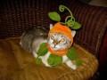 Animale - Pisicuta la moda