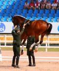 Animale - Un cal special