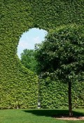 Ciudate - Frumusetile naturii