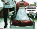 Animale - Pisica la frizer
