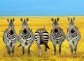 Animale - Indrazneste sa fii diferit!