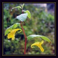Flori - Floare