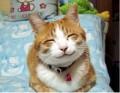 Animale - Cea mai fericita pisica din lume
