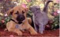 Animale - Stai sa iti spun ceva la ureche sa nu ne auda nimeni