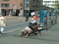 Animale - Mijloc de transport ecologic