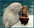 Animale - Delfinul, cel mai bun prieten