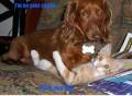 Animale - Dragostea nu are limite