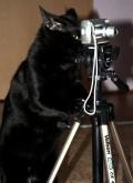 Animale - Fotograful profesionist