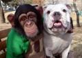 Animale - O poza cu cel mai bun prieten