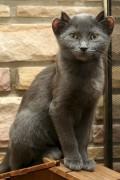 Animale - Pisica cu patru urechi
