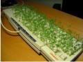 Diverse - Cultiva marijuana