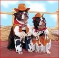 Animale - O Suzana sunt cowboy vestit si la lupta am pornit
