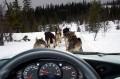 Animale - Husky la datorie