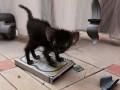 Animale - Pisica rea