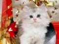 Animale - Cel mai frumos cadou