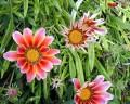 Martie - Flori de primavara