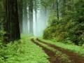 Artistice - Padure verde