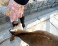 Animale - Hmmm, interesant unghiu'  ...