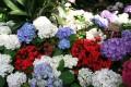 Flori - Flori frumoase