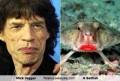 Celebritati - Asemanare: Mick Jagger si Pestele Liliac
