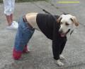Animale - cutu la moda
