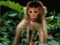 Animale - O gorila nervoasa
