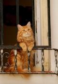 Animale - Of Romeo, unde esti?