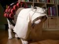 Animale - Pisica musulmana
