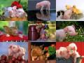 Animale - poze porcoase(?)