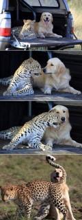 Animale - Prietenie intre animale