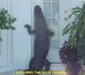 Animale - E cineva acasa???