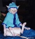 Animale - Cea mai urata pisica