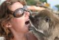 Animale - Ce pasta de dinti folosesti draga??