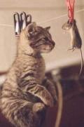 Animale - La uscat