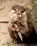 Animale - Acesta este puiul meu drag