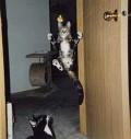 Animale - Pisica Matrix