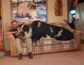Animale - Animal de casa