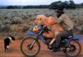 Animale - Transport