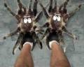 Diverse - Papucei cu tarantule