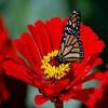 Avatare - Floare